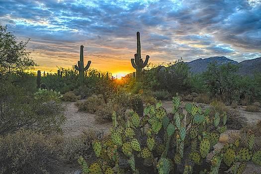 Chance Kafka - Sabino Canyon and Mount Kimball Sunset, Tucson, AZ