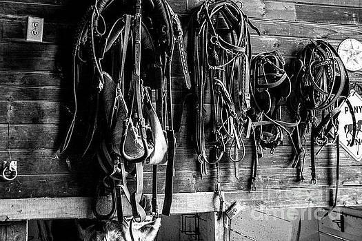 Saddles by Alana Ranney