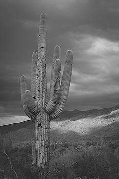 Saguaro 1 by Melisa Elliott