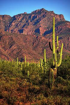 Chance Kafka - Saguaro and Superstition Mountains