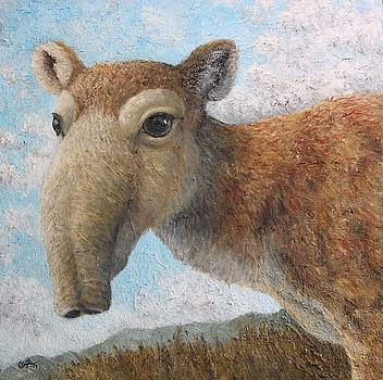 Saiga Antelope by Elin Johnsen