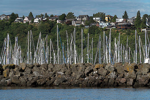 Sailboats in Seattle by Mark Langford