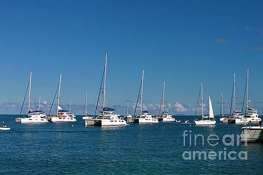 Sailboats in the Bay by Angela Stafford