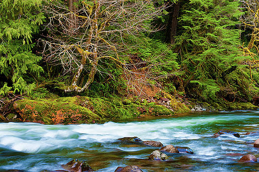 Salmon River Mt. Hood National Forest by Dee Browning