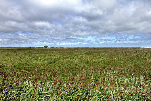 Salt Marsh, Thornham, Norfolk by John Edwards