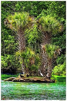 Salt Springs Island II by Rogermike Wilson