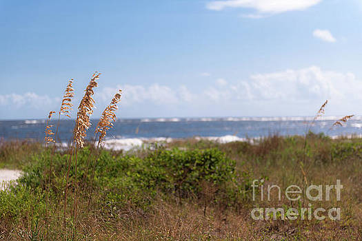 Salty Island Breeze over Breach Inlet by Dale Powell
