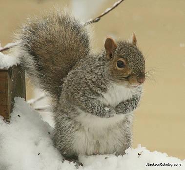 Sammy the Squirrel by Jonathan Jackson Coe