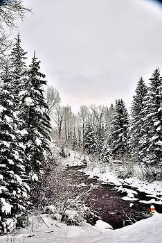 San Juan Mountain stream at winter time by Gerald Blaine