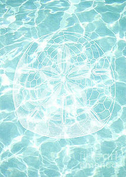 Sand Dollar by Kelley Freel-Ebner