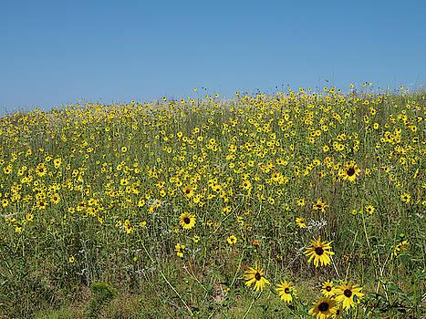 Sand Hills Sunflowers by Mark Dahmke