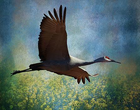 Sandhill Crane Art by Gloria Anderson