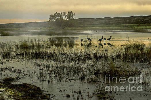Sandhill Serenity by Susan Warren