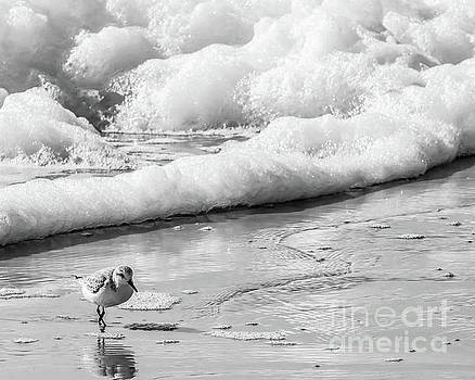 Sandpiper in the Surf by Thomas Marchessault