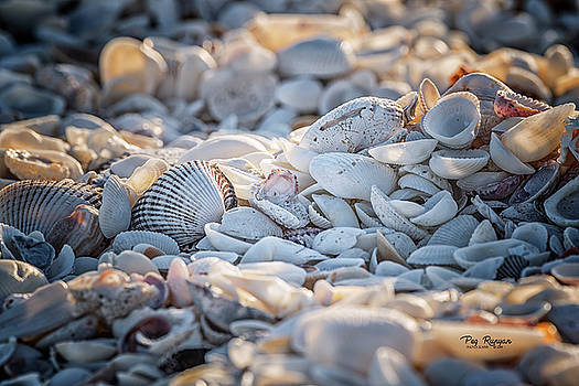 Sanibel Shells by Peg Runyan