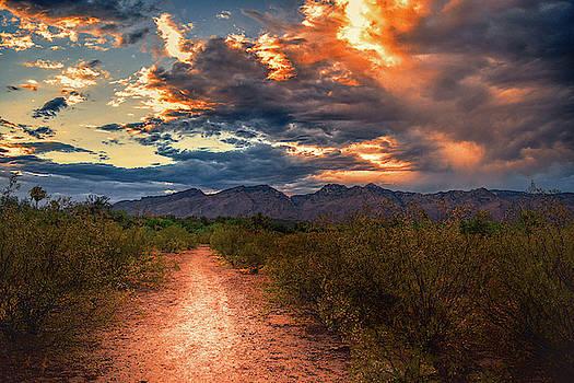 Chance Kafka - Santa Catalina Mountains Path, Tucson