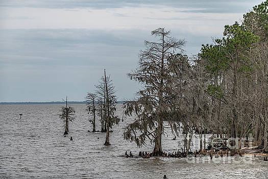 Santee Lake Moultrie - Berkeley Country by Dale Powell