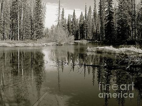 Sawtooth National Forest by Art Sandi