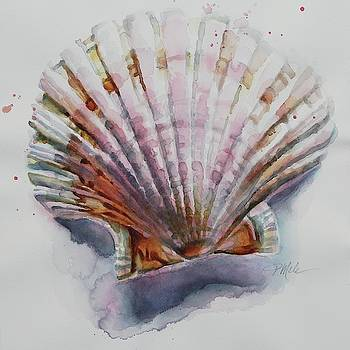 Scallop Seashell by Tracy Male