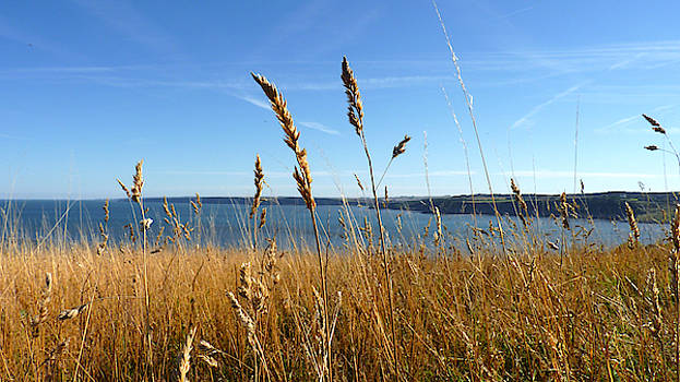 Scarborough Cliff Top - Grass by Chris Gill
