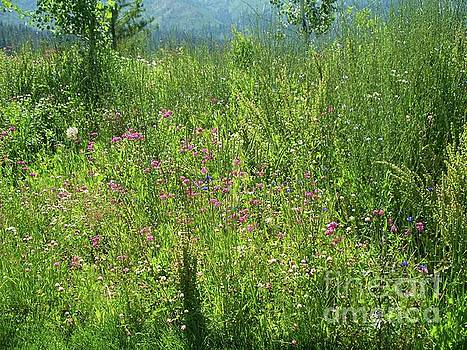 Scent Of Wildflowers Spread Across The Valley by Art Sandi