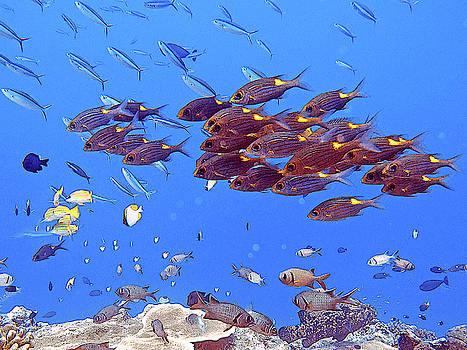 Susan Burger - Schooling Fish