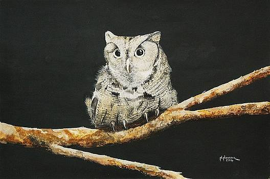 Screech Owl by Nelson Hammer