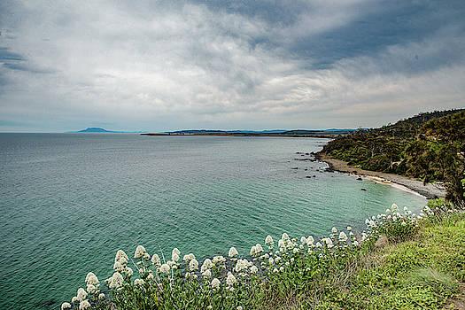 Sea and flowers by Sergey Simanovsky