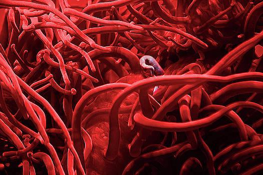 Sea Anemone In Red by Miroslava Jurcik