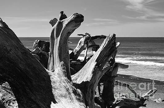 Sea Bones by Jeni Gray
