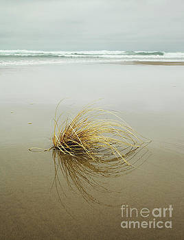 Sea Grass on Beach by Charmian Vistaunet