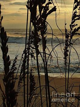 Cindy Treger - Sea Oats Standing Ready To Protect