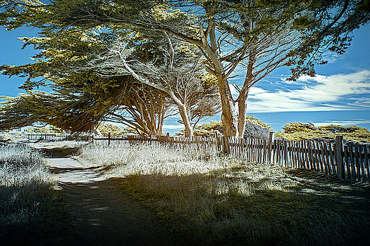 Jon Glaser - Sea Ranch Coastline