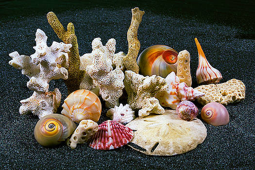 Sea Shells in the Studio by Jackson Ball