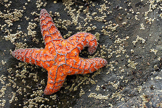 Sea Star by Debby Richards