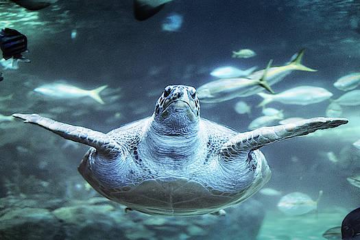 Sea Turtle by Scott Wyatt