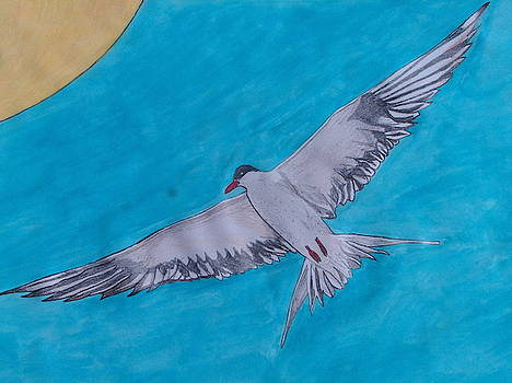 Seagull 1 by Michael Hoback