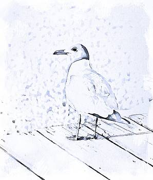 Seagull On Deck 4 by Cathy Lindsey