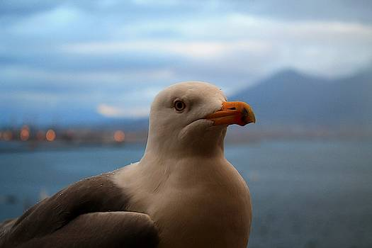 Seagull on Duty by Catie Canetti