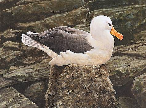 Seagull on Nest by Alan M Hunt by Alan M Hunt