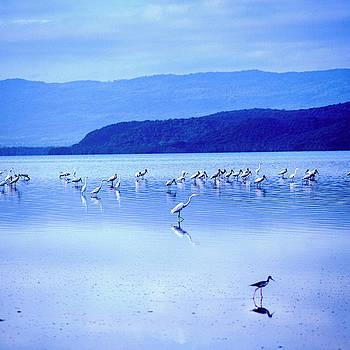 Seagulls by Eugenio Opitz