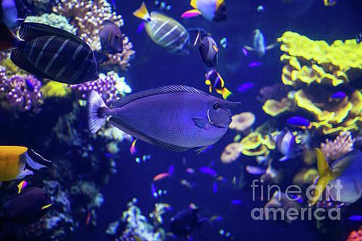 Wayne Moran - Sealife at Oceanographic Museum of Monaco Jacques Cousteau Museum