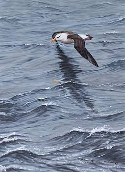 Searching Seabird Painting by Alan M Hunt by Alan M Hunt