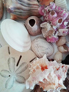 Sharon Williams Eng - Seashell Assortment II