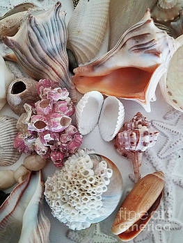 Sharon Williams Eng - Seashell Assortment III