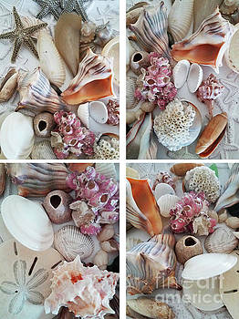 Sharon Williams Eng - Seashell Assortment Quadriptych