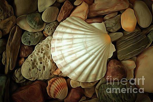 Seashell on sea pebbles by Michal Boubin