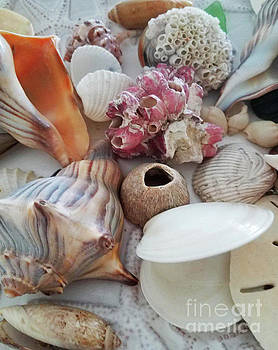 Sharon Williams Eng - Seashells Assortment 1
