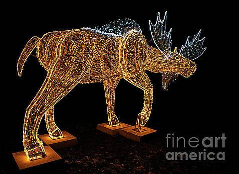 Season Spirit Moose.. by Nina Stavlund