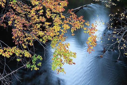 Seasons of Change by Fran Riley